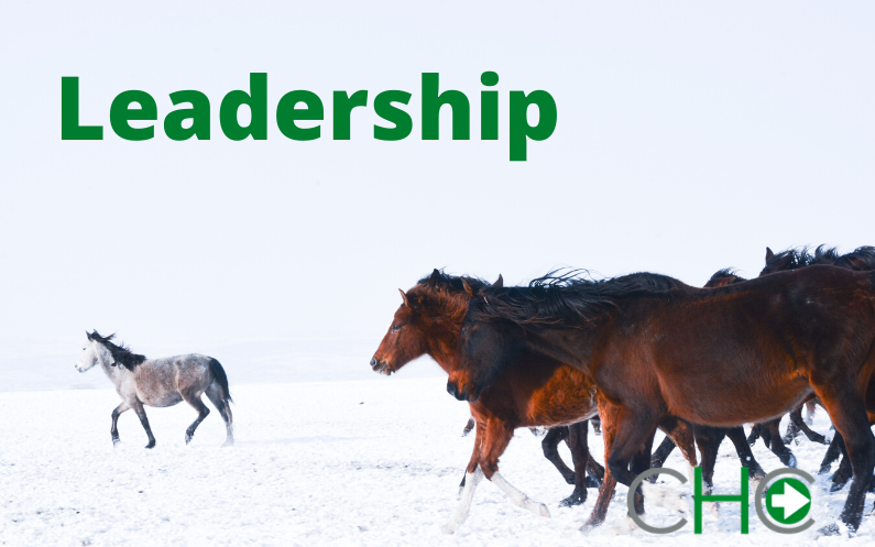 Successful Teams Need Effective  Leadership